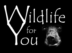 Wildlife for You
